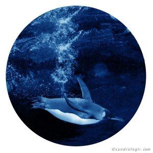 Animal Table - Blue Penguin 35