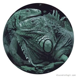 Animal Table - Iguana 2