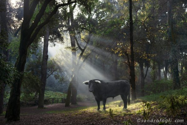 Fantastikworld 2016, romapark bull