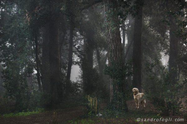 Fantastikworld 2016, romapark dog