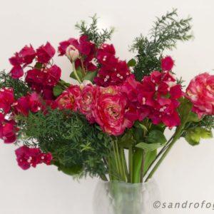 silkflower 2012-10
