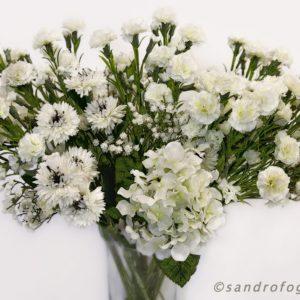 silkflower 2012-7