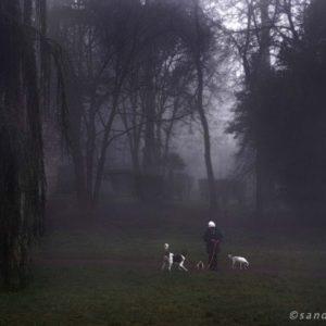 Dog Story - Villa Ada 1