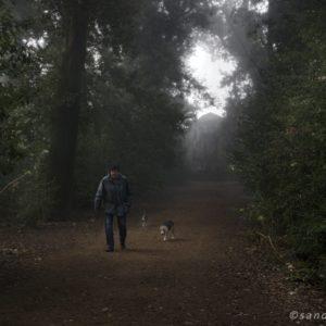 Dog Story - Villa Ada 2