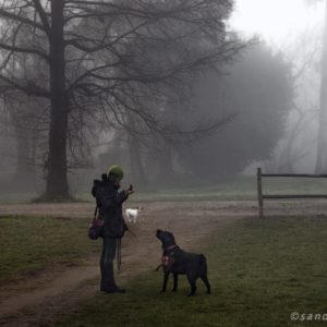 Dog Story - Villa Ada 3